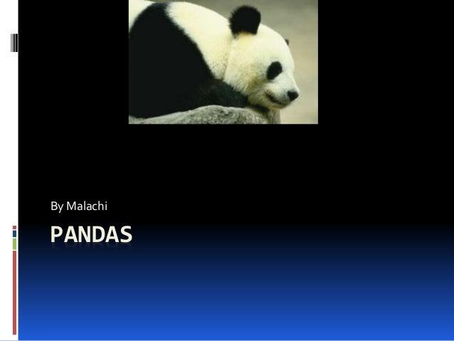 PANDAS By Malachi