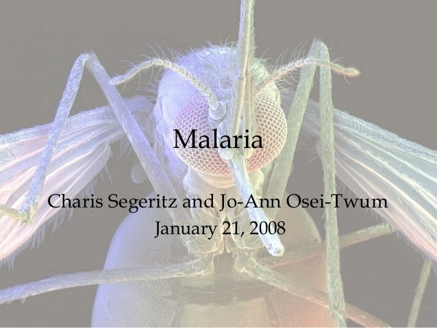 Malaria Charis Segeritz and Jo-Ann Osei-Twum January 21, 2008