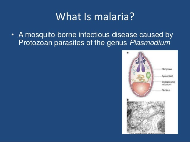 What Is malaria?• A mosquito-borne infectious disease caused by  Protozoan parasites of the genus Plasmodium