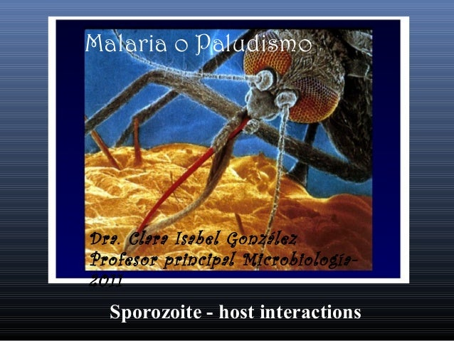 Sporozoite - host interactionsMalaria o PaludismoDra. Clara Isabel GonzálezProfesor principal Microbiología-2011