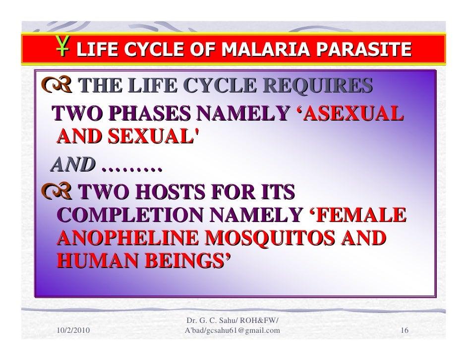 Malaria Life Cycle Diagram Life Cycle of Malaria Parasite