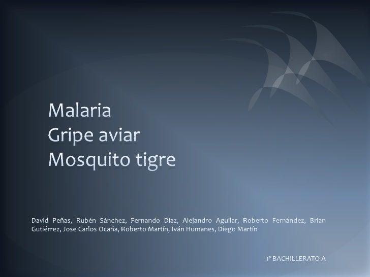 MalariaGripe aviarMosquito tigre<br />David Peñas, Rubén Sánchez, Fernando Díaz, Alejandro Aguilar, Roberto Fernández, Bri...