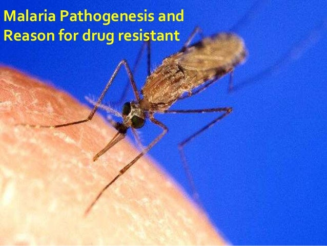 Malaria Pathogenesis andReason for drug resistant