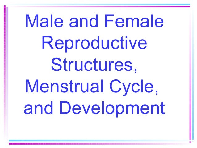 Male and Female Reproductive Structures, Menstrual Cycle, and Development