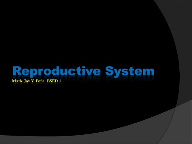 Male rep. system