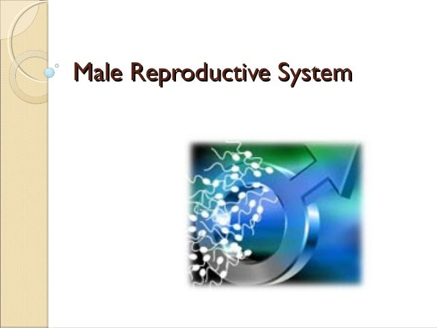 Male reproductive system 203