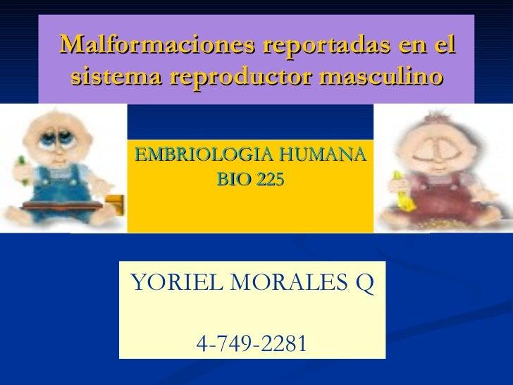 Malformaciones Reportadas En El Sistema Reproductor Masculino