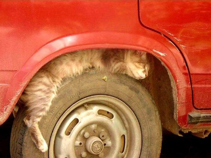 Small cat - Malé kotě