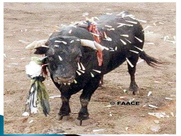 Imágenes del maltrato animal