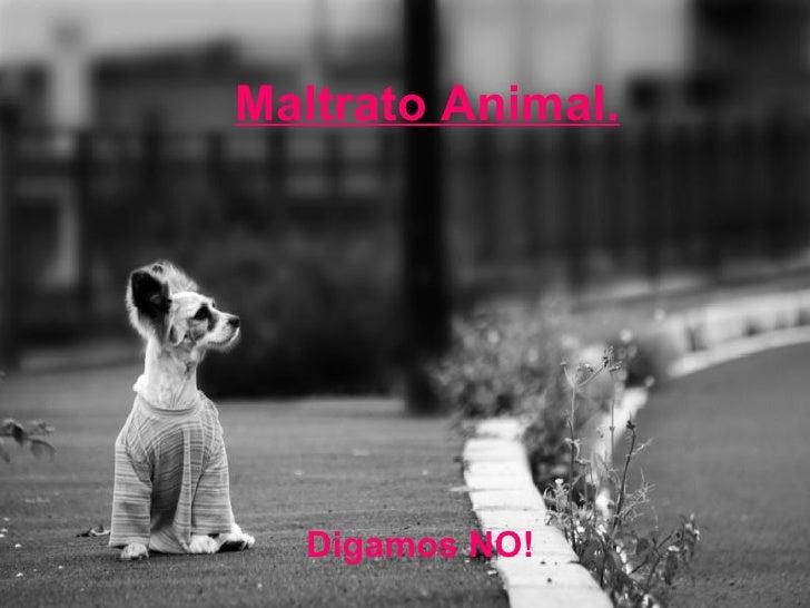Maltrato Animal. Digamos NO!