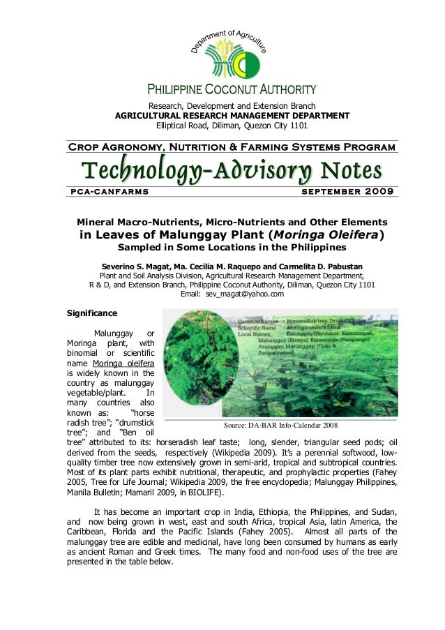 malunggay leaves investigatory project Malunggay and spinach powder investigatory project how to make introduction from my investigatory project in natural science what can be my introduction on a report about moringa oleifera soap or malunggay.