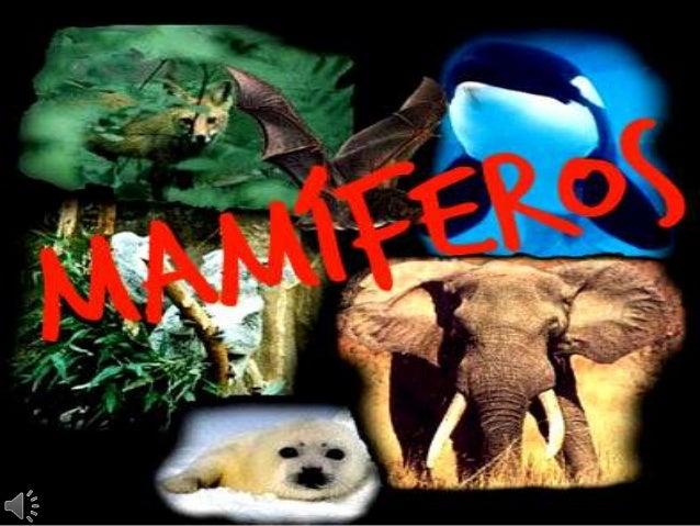 Os mamíferos (do latim científico Mammalia) constituemuma classe de animais vertebrados, que se caracterizampela presença ...
