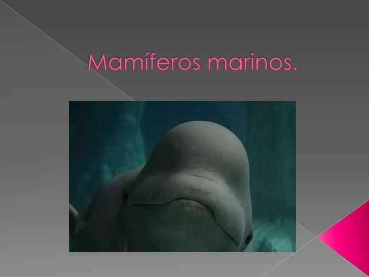 Mamíferos marinos.<br />