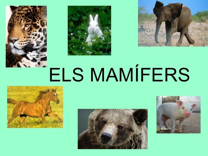Mamifers