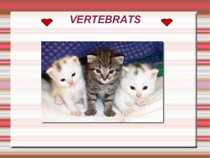VERTEBRATS