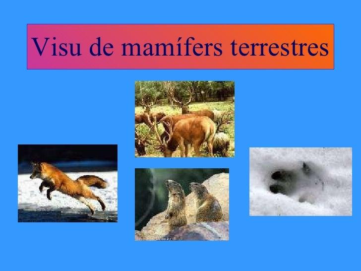 Visu de mamífers terrestres
