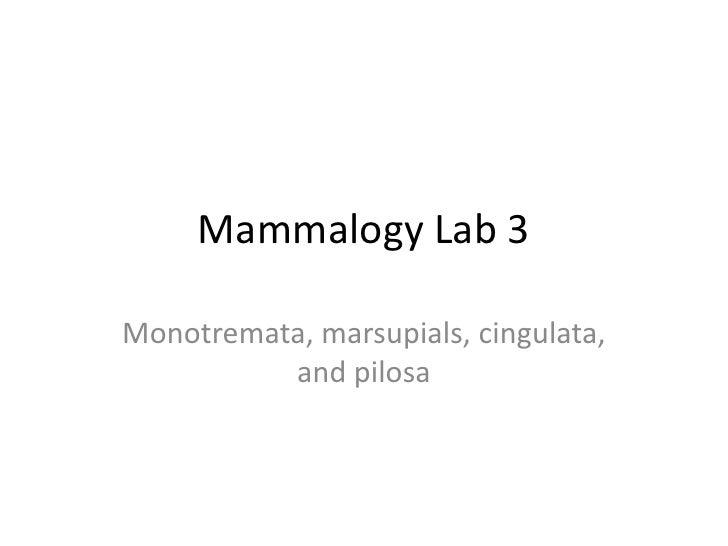 Mammalogy Lab 3