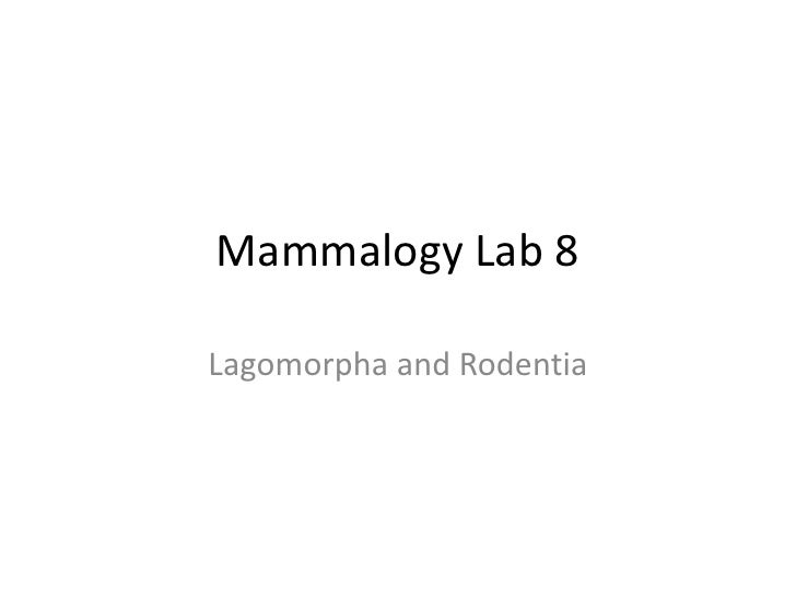 Mammalogy Lab 8<br />Lagomorpha and Rodentia<br />