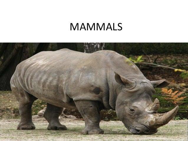 Mammals1 xd