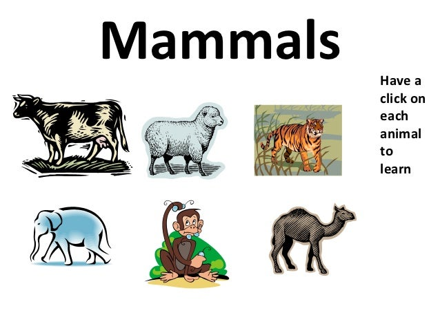 Mammals   Have a          click on          each          animal          to          learn
