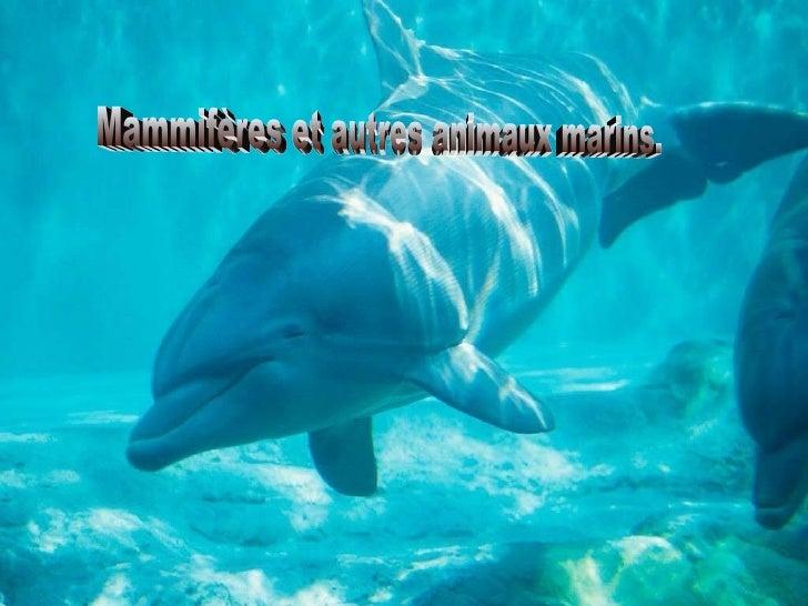 Mammifères et autres animaux marins.