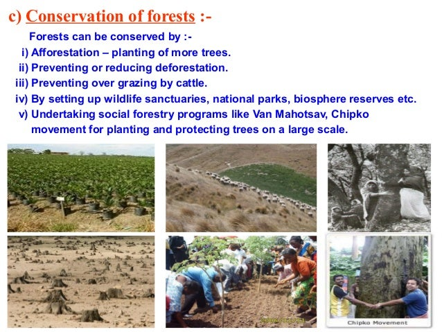 essay on conservation of forest Forest conservation as well as the enhancement of forest cover and the roles of forests in meeting basic human needs 1 introduction the june 1992 united nations.