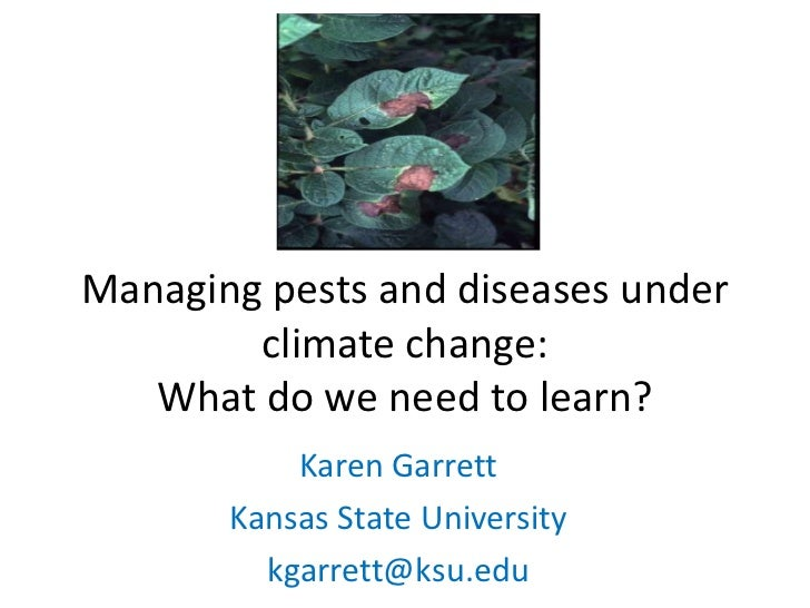 Managing pests and diseases under        climate change:   What do we need to learn?           Karen Garrett       Kansas ...