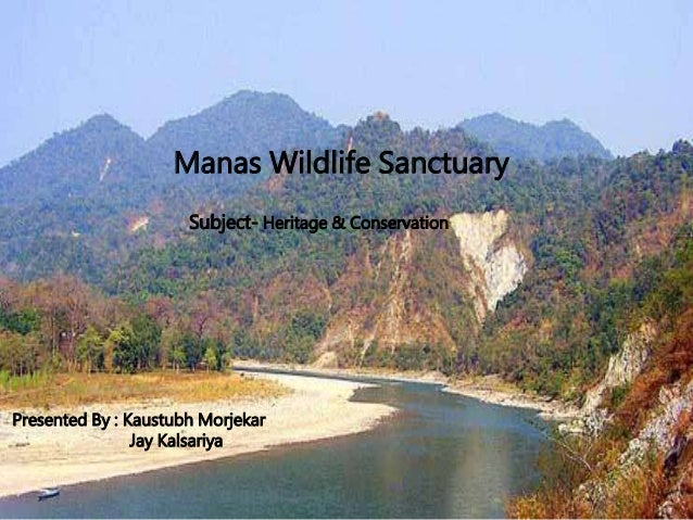 manas wildlife sanctuary The manas wildlife sanctuary is located in the state of assam and is one of the biggest sanctuaries in india the park is named after the manas river that runs through the heart of this.