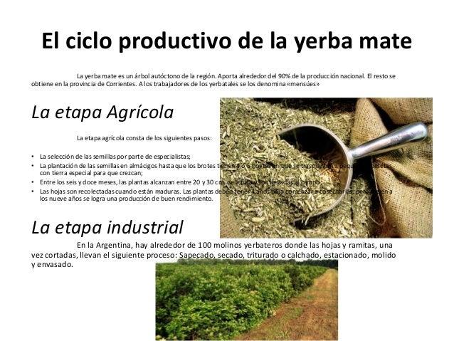 Circuito Productivo De La Yerba Mate : El nordeste argentino