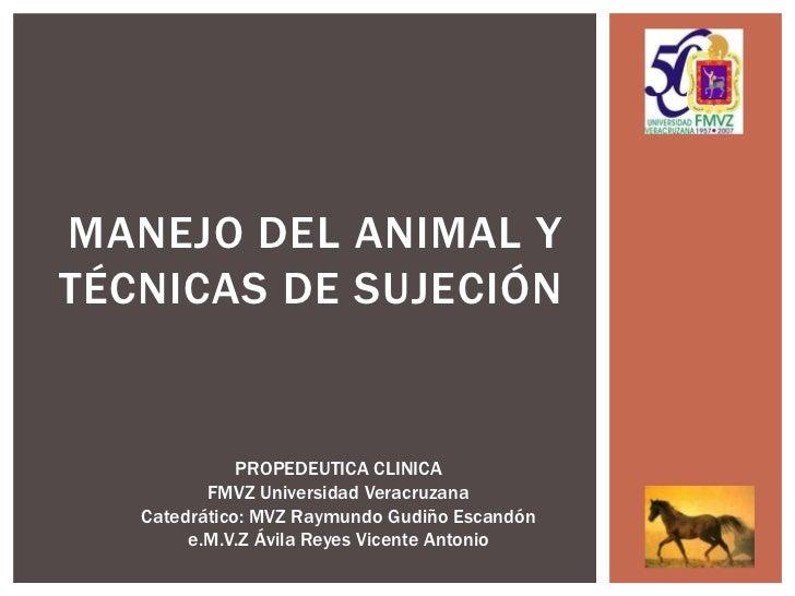 MANEJO DEL ANIMAL YTÉCNICAS DE SUJECIÓN              PROPEDEUTICA CLINICA          FMVZ Universidad Veracruzana   Catedrát...