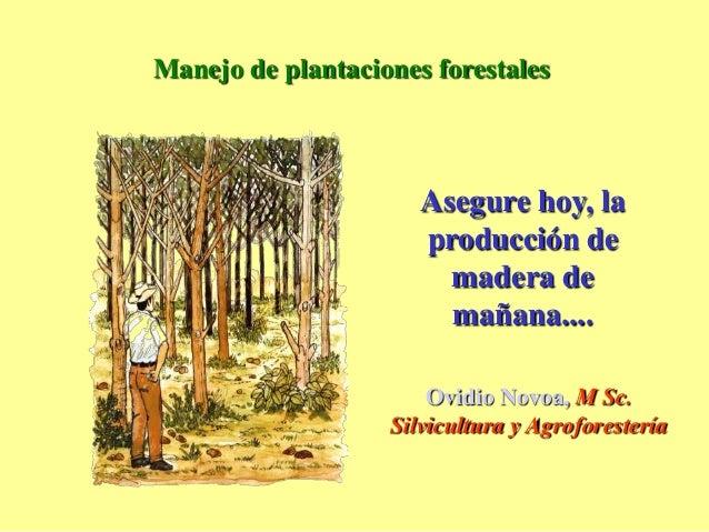 Manejo forestal for Manejo de viveros forestales