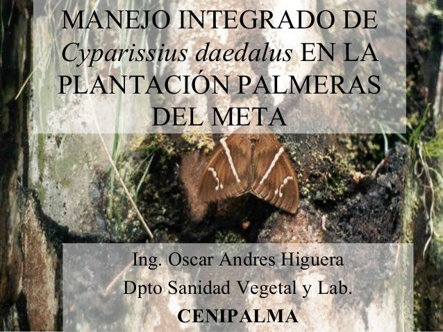 MANEJO INTEGRADO DE Cyparissius daedalus EN LA PLANTACIÓN PALMERAS DEL META Ing. Oscar Andres Higuera Dpto Sanidad Vegetal...