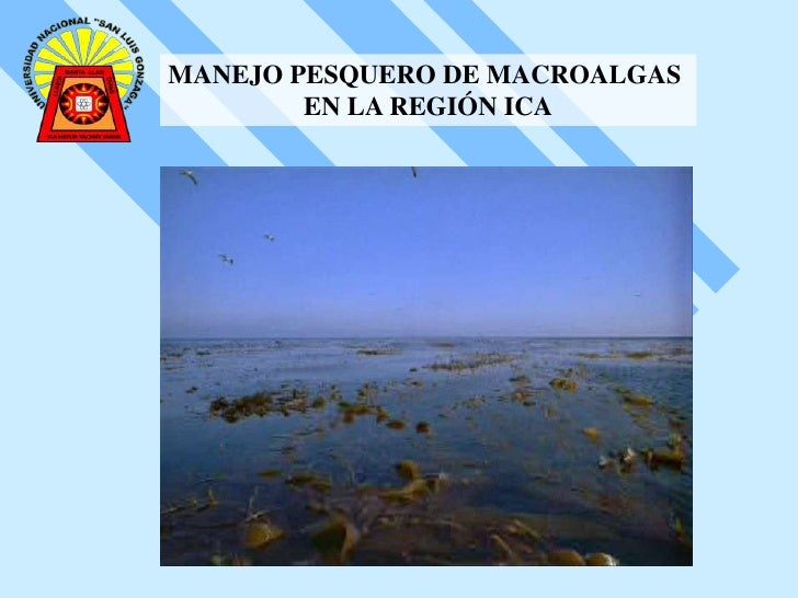 MANEJO PESQUERO DE MACROALGAS <br />EN LA REGIÓN ICA<br />