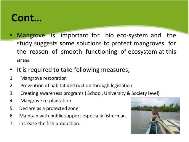 importance of mangrove ecosystem essay