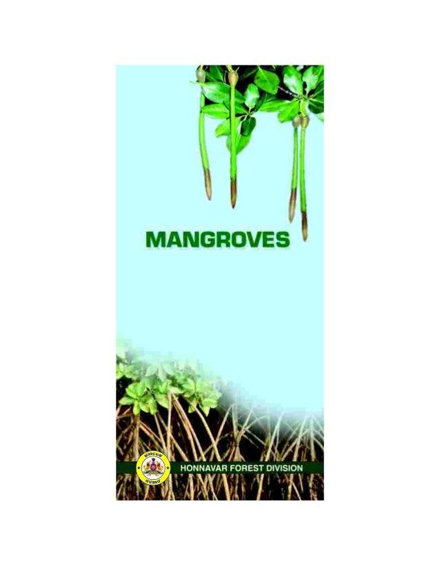 Mangroves of honnavar