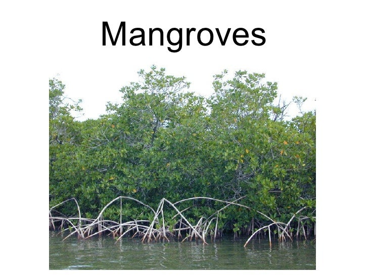Mangroves power point