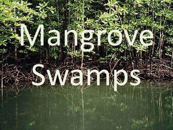Mangrove Swamps<br />