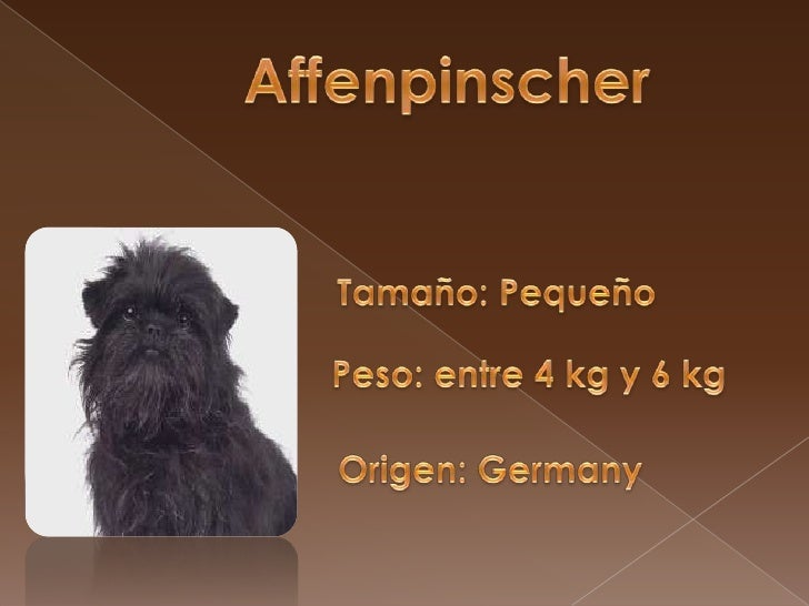 Manolito.dog