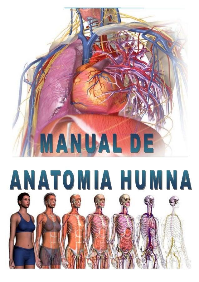 Manual de Anatomía Humana Prof. Edwin Saldaña Ambulódegui 1