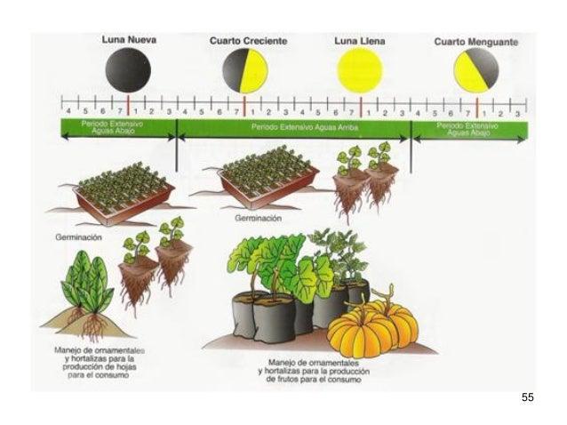 55 56 influencia de las fases lunares para cosechar plantas