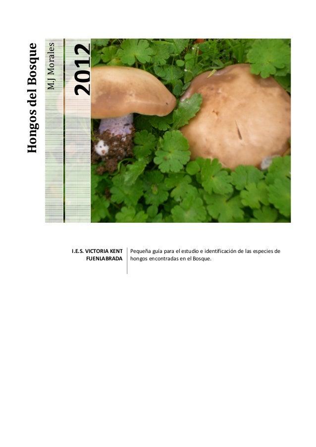 Hongos del Bosque                                   2012                    M.J Morales                                  I...