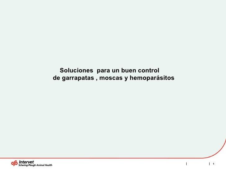 Soluciones  para un buen control  de garrapatas , moscas y hemoparásitos