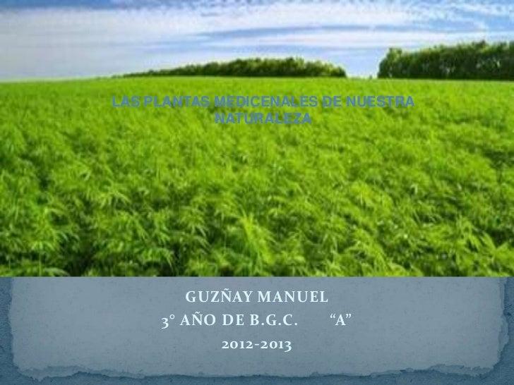 """LAS PLANTAS MEDICENALES DE NUESTRA            NATURALEZA        GUZÑAY MANUEL     3° AÑO DE B.G.C. """"A""""            2012-2013"""