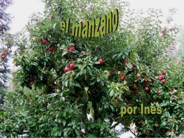 guión•   Las manzanas caen del árbol•   Alimentación y la respiración•   Reproducción•   Flores y•   frutos