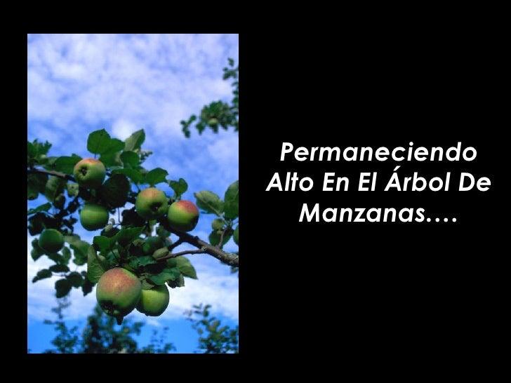 Permaneciendo Alto En El Árbol De Manzanas.…