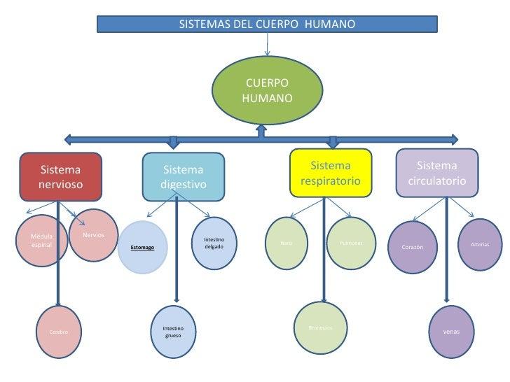 SISTEMAS DEL CUERPO  HUMANO <br />CUERPO HUMANO<br />Sistema respiratorio<br />Sistema circulatorio <br />Sistema  nervios...