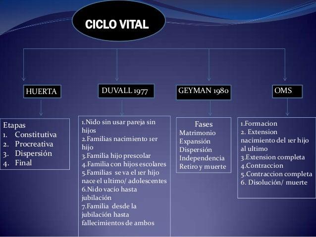 CICLO VITALHUERTA DUVALL 1977 GEYMAN 1980 OMSEtapas1. Constitutiva2. Procreativa3. Dispersión4. Final1.Nido sin usar parej...