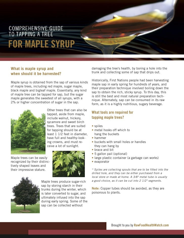 Comprehensive Guide to Tapping a Tree for Maple Syrup