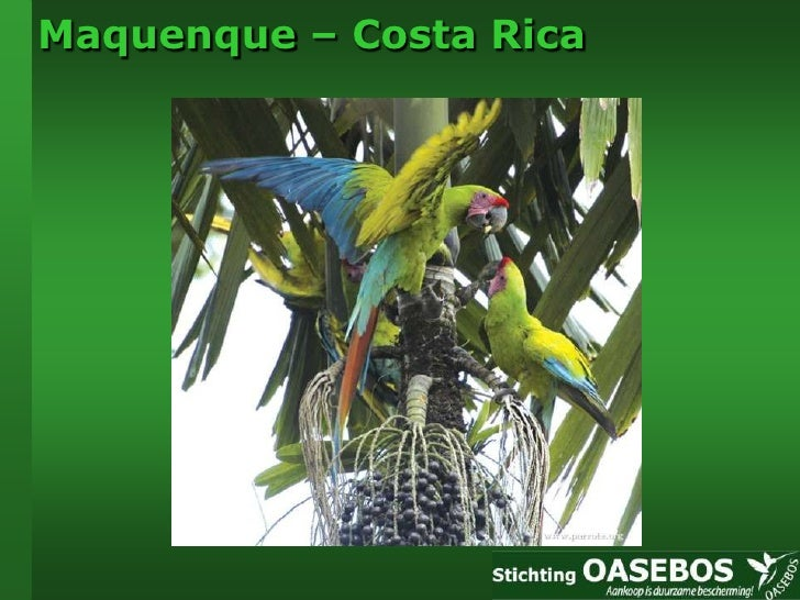 Maquenque - Costa Rica - Stichting Oasebos