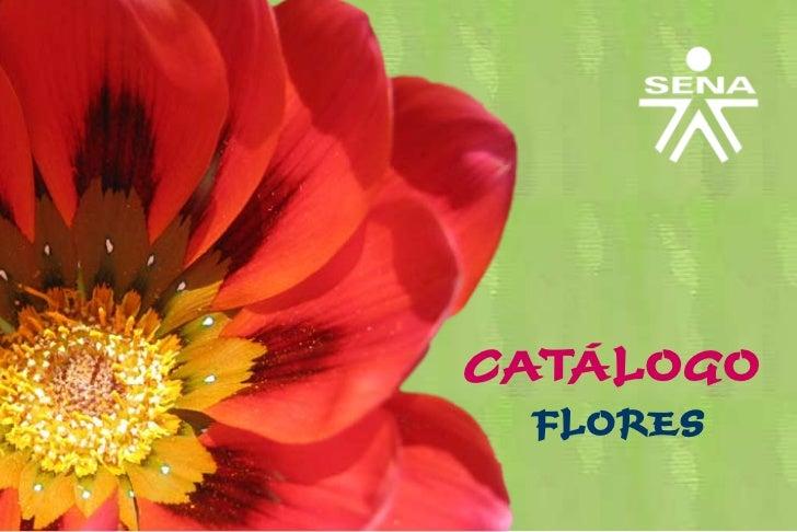 CATÁLOGO FLORES